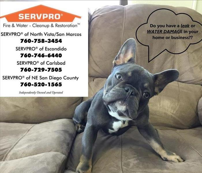 Dog with list of SERVPRO phone numbers and locations
